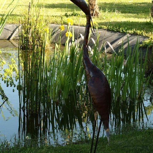 hamac détente mare poissons grenouilles nature environnement calme grand jardin piscine chauffée