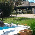 piscine chauffée 10 personnes dordogne perigord location saisonniere gite charme authentique